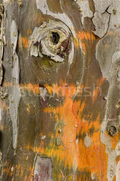 Cyprys drzewo kory szczegół kolorowy wody Zdjęcia stock © AlessandroZocc
