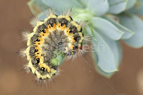 Colorido lagarta Foto stock © AlessandroZocc