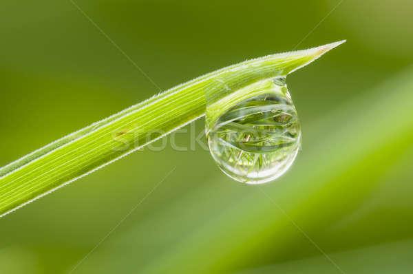 Rosa spadek trawy wskazówka ostrze zielona trawa Zdjęcia stock © AlessandroZocc