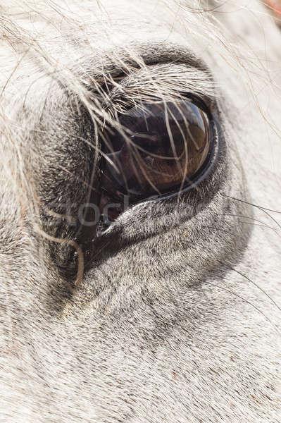 Fehér ló szem közelkép természet ló mező Stock fotó © AlessandroZocc