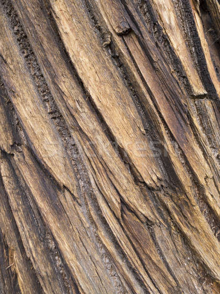 Fa ugatás részlet fatörzs fa terv Stock fotó © AlessandroZocc