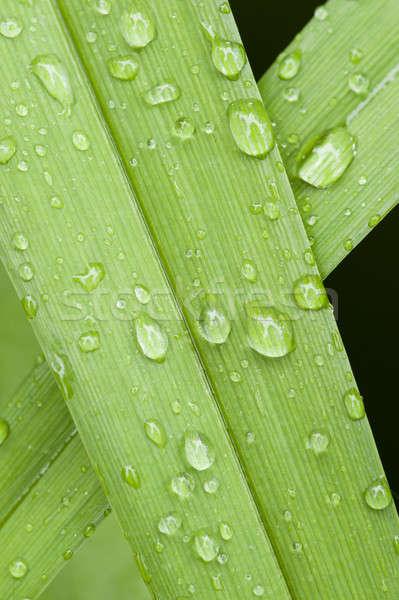 Rosa krople trawy zielona trawa wody zielone Zdjęcia stock © AlessandroZocc