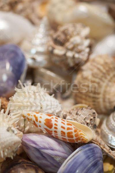 Zee schelpen groep tropische collectie Stockfoto © AlessandroZocc