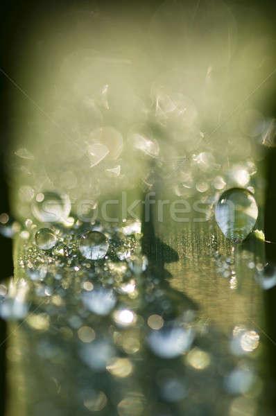 Harmat fű cseppek penge zöld fű eső Stock fotó © AlessandroZocc