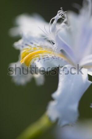Stock fotó: Fehér · díszítő · virágok · virág · részlet · szirmok