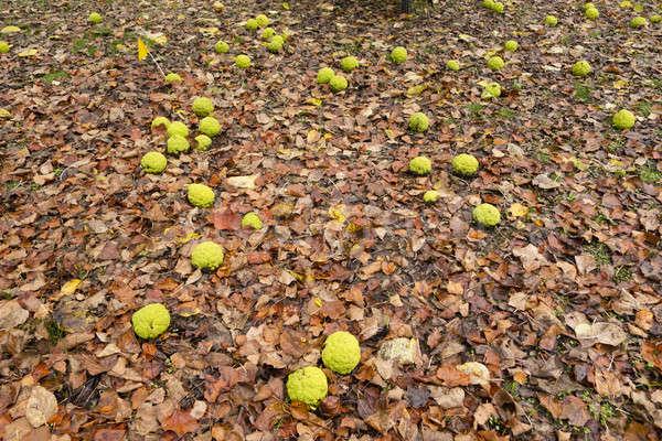 Fa gyümölcsök föld narancs alma ló Stock fotó © AlessandroZocc