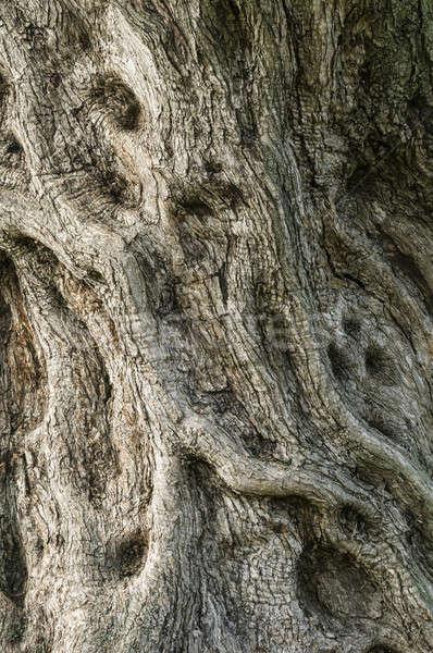 Detay havlama ağaç ahşap yağ Stok fotoğraf © AlessandroZocc