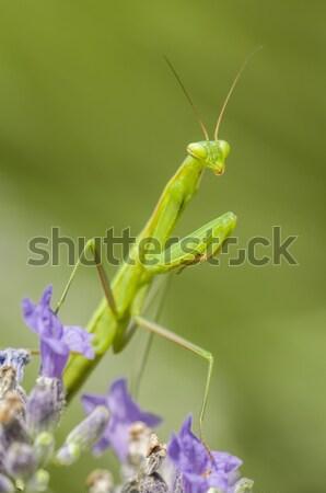 Masculino oração flor natureza fundo Foto stock © AlessandroZocc