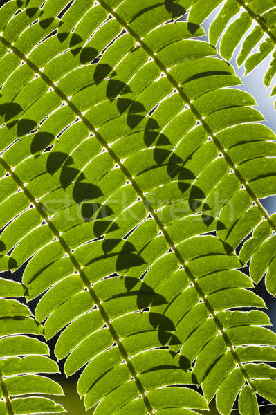 Lignes ombres feuille arbre rétroéclairage texture Photo stock © AlessandroZocc