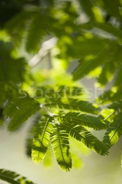 Bladeren detail zon licht voorjaar blad Stockfoto © AlessandroZocc