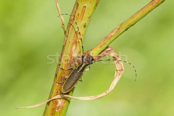 Böcek dal orman doğa yaz böcek Stok fotoğraf © AlessandroZocc