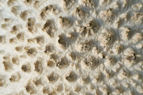 Pilz weiß Detail cap Gras Bereich Stock foto © AlessandroZocc