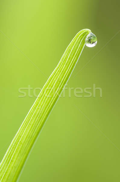 Dew drop on blade of grass Stock photo © AlessandroZocc