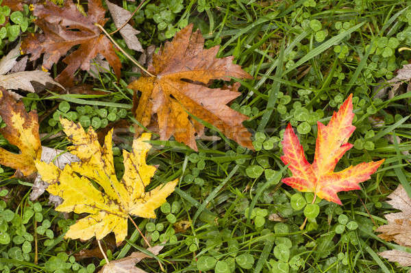 Leaves fallen on ground  Stock photo © AlessandroZocc