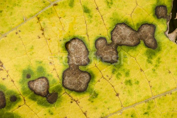 Места мертвых лист желтый зеленый осень Сток-фото © AlessandroZocc