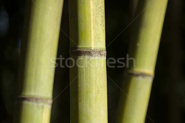 green giant bamboo stems Stock photo © AlessandroZocc