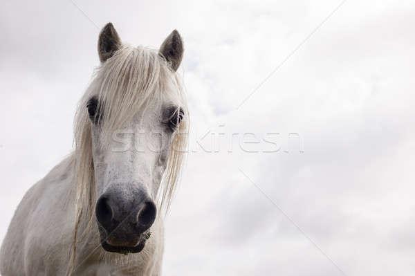 Fehér ló fej közelkép virág természet ló Stock fotó © AlessandroZocc