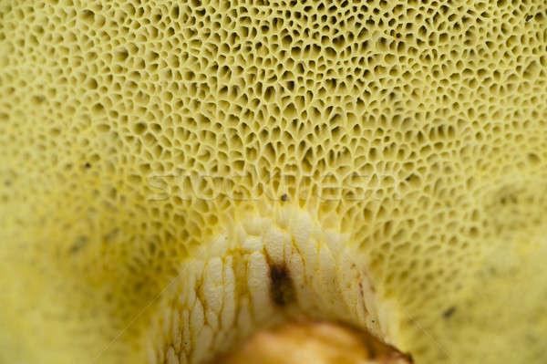 Sponge like mushroom gills Stock photo © AlessandroZocc