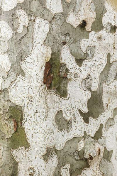 平面 ツリー 樹皮 詳細 工場 ストックフォト © AlessandroZocc