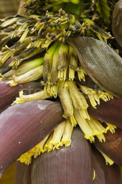 żółte kwiaty bananów drzewo wiosną Zdjęcia stock © AlessandroZocc