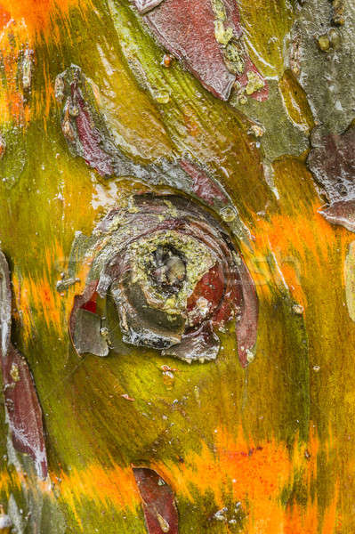 Stok fotoğraf: Ağaç · havlama · detay · renkli · su