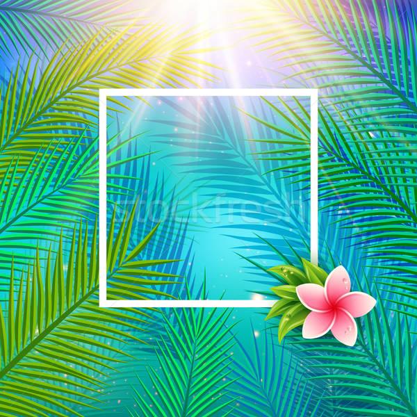 Stock fotó: Trópusi · pálmalevelek · fa · természet · terv · levél