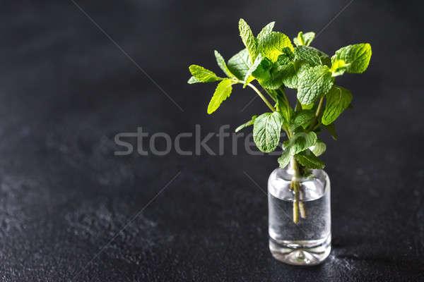 свежие мята стекла ваза лист Сток-фото © Alex9500