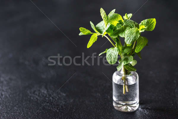 Taze nane cam vazo yaprak Stok fotoğraf © Alex9500