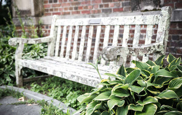 Old bench in summer park Stock photo © Alex9500
