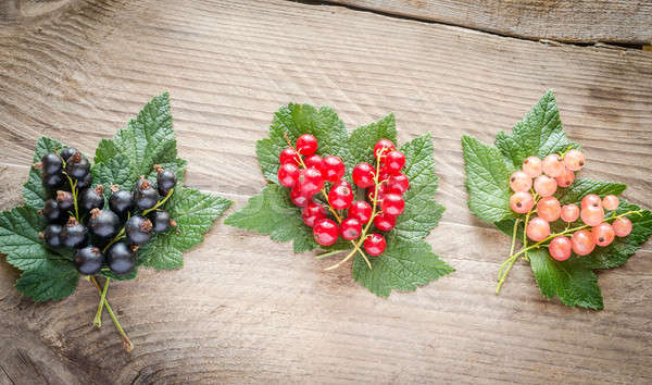 Friss ribiszke levelek fa deszka étel kert Stock fotó © Alex9500