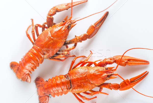 Boiled crayfish on the white background Stock photo © Alex9500