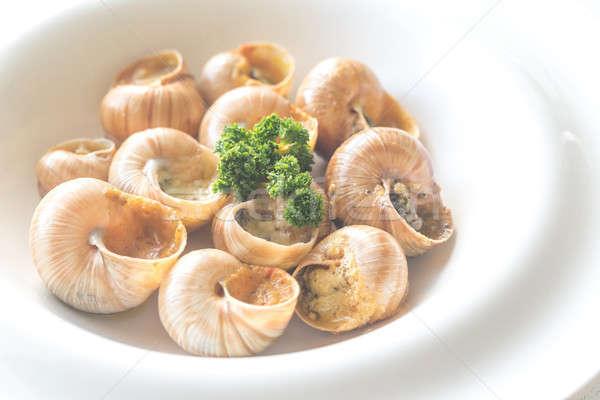 Foto stock: Cozinhado · jantar · branco · almoço · caracol
