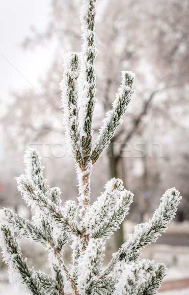 Frosted tree Stock photo © Alex9500