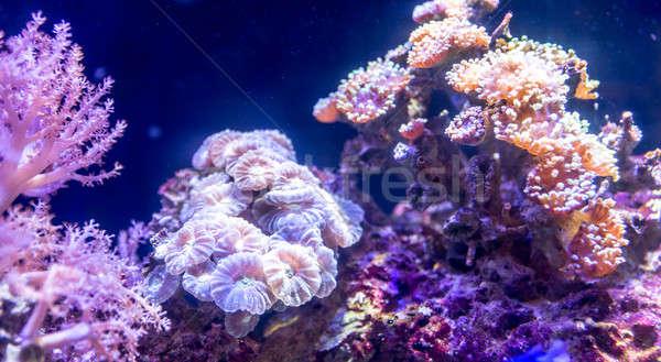 коралловый риф аквариум природы океана жизни пузырьки Сток-фото © Alex9500