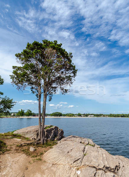 árvore costa Connecticut praia céu paisagem Foto stock © Alex9500