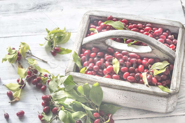 Dogwood berries in the basket Stock photo © Alex9500