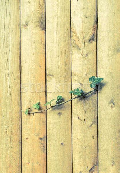 Houten klimop licht tuin achtergrond ruimte Stockfoto © Alex9500