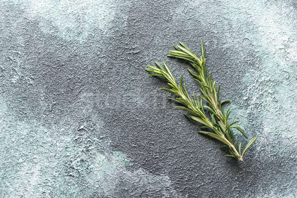Fresh rosemary on navy background Stock photo © Alex9500