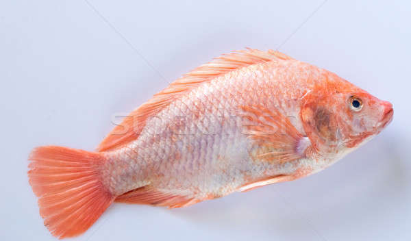 Fraîches blanche alimentaire poissons table rouge Photo stock © Alex9500