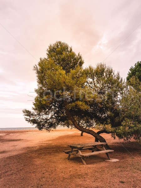 Foto stock: Pinho · árvores · mediterrânico · árvore · sol · mar