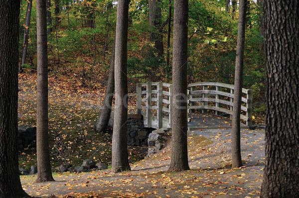 лес моста осень перспективы мнение покрытый Сток-фото © alex_davydoff