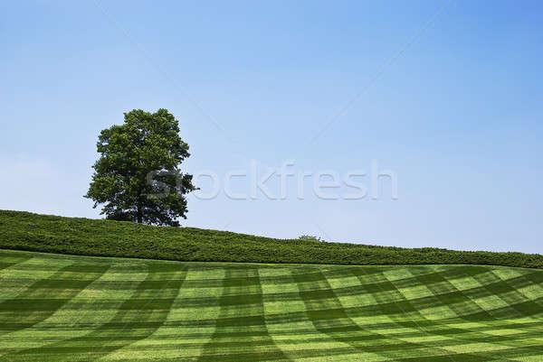одиноко дерево красивой пейзаж дороги деревья Сток-фото © alex_davydoff