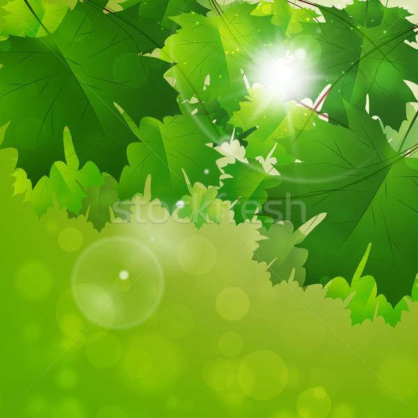 Fényes tavasz absztrakt zöld levelek nap fény Stock fotó © alexaldo