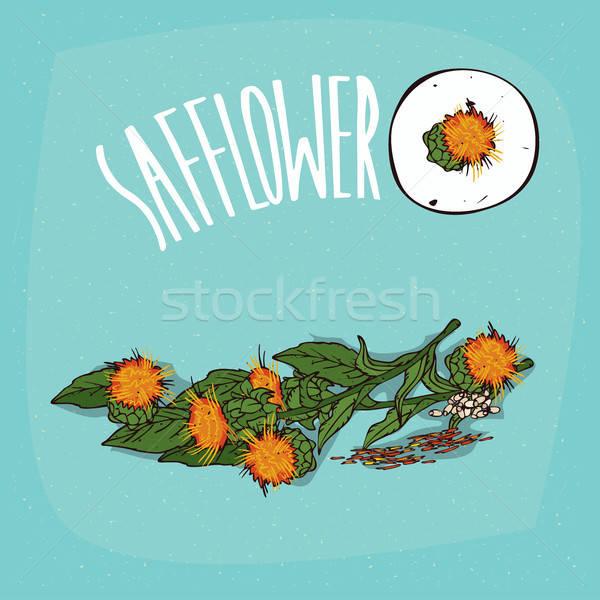 Set of isolated plant Safflower flowers herb Stock photo © alexanderandariadna