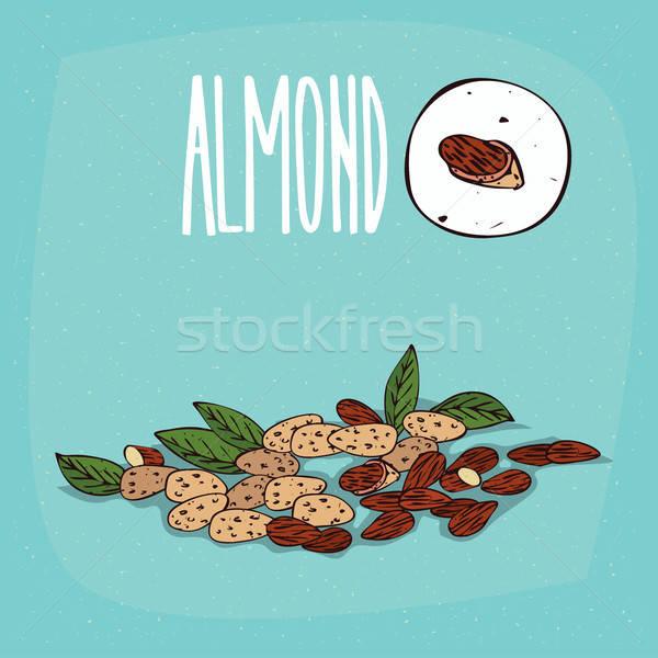 Set of isolated plant Almond nuts herb Stock photo © alexanderandariadna