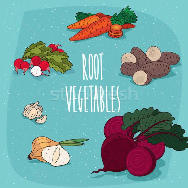 Szett izolált clipart ehető gyökér zöldségek Stock fotó © alexanderandariadna