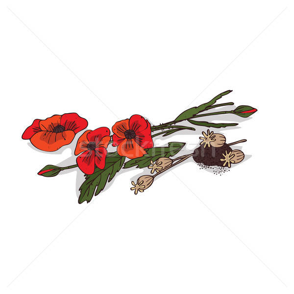 Stock photo: Isolated clipart Poppyseed