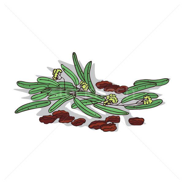 Aislado clipart planta blanco botánico dibujo Foto stock © alexanderandariadna
