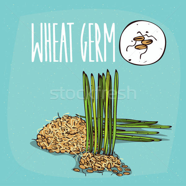 Stock photo: Set of isolated plant Wheat germ grains herb