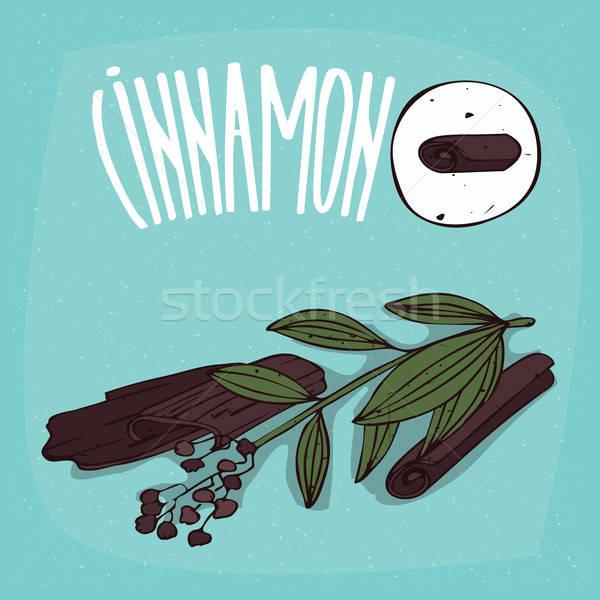 Set of isolated plant Cinnamon sticks herb Stock photo © alexanderandariadna